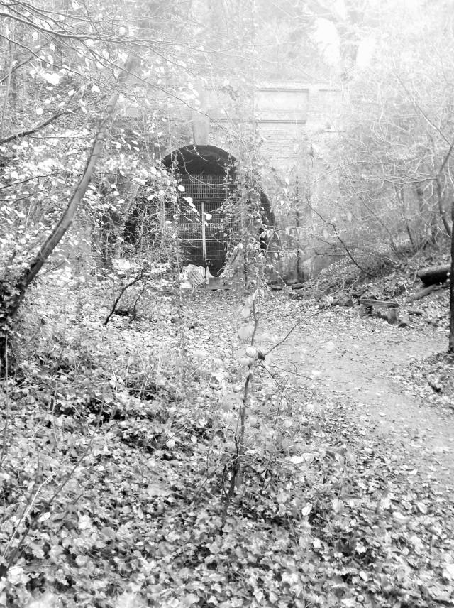 sydenham hill woods (3)