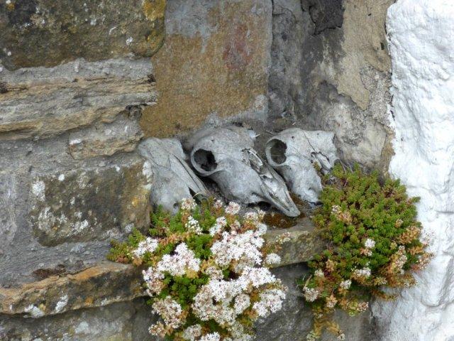 Sue vincent skulls