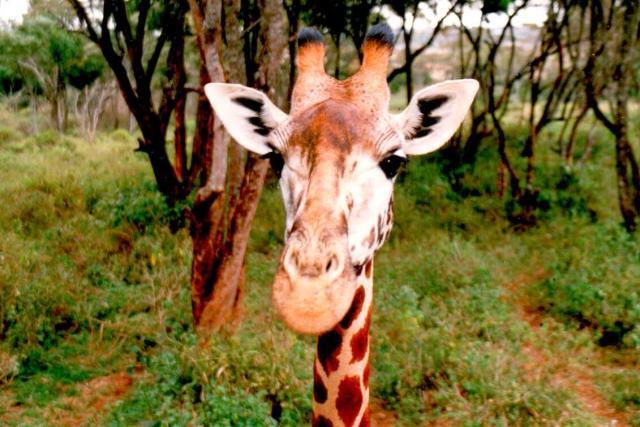 kenya-one0002