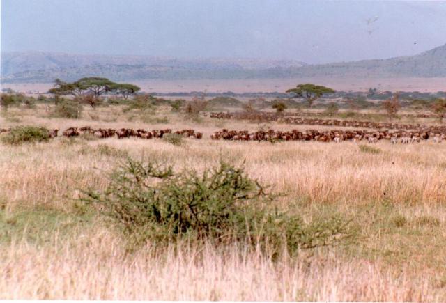 kenya-one0022