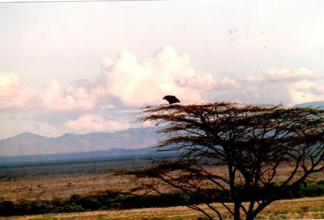 kenya-two0035