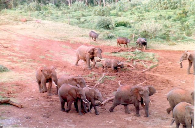 kenya-three0014