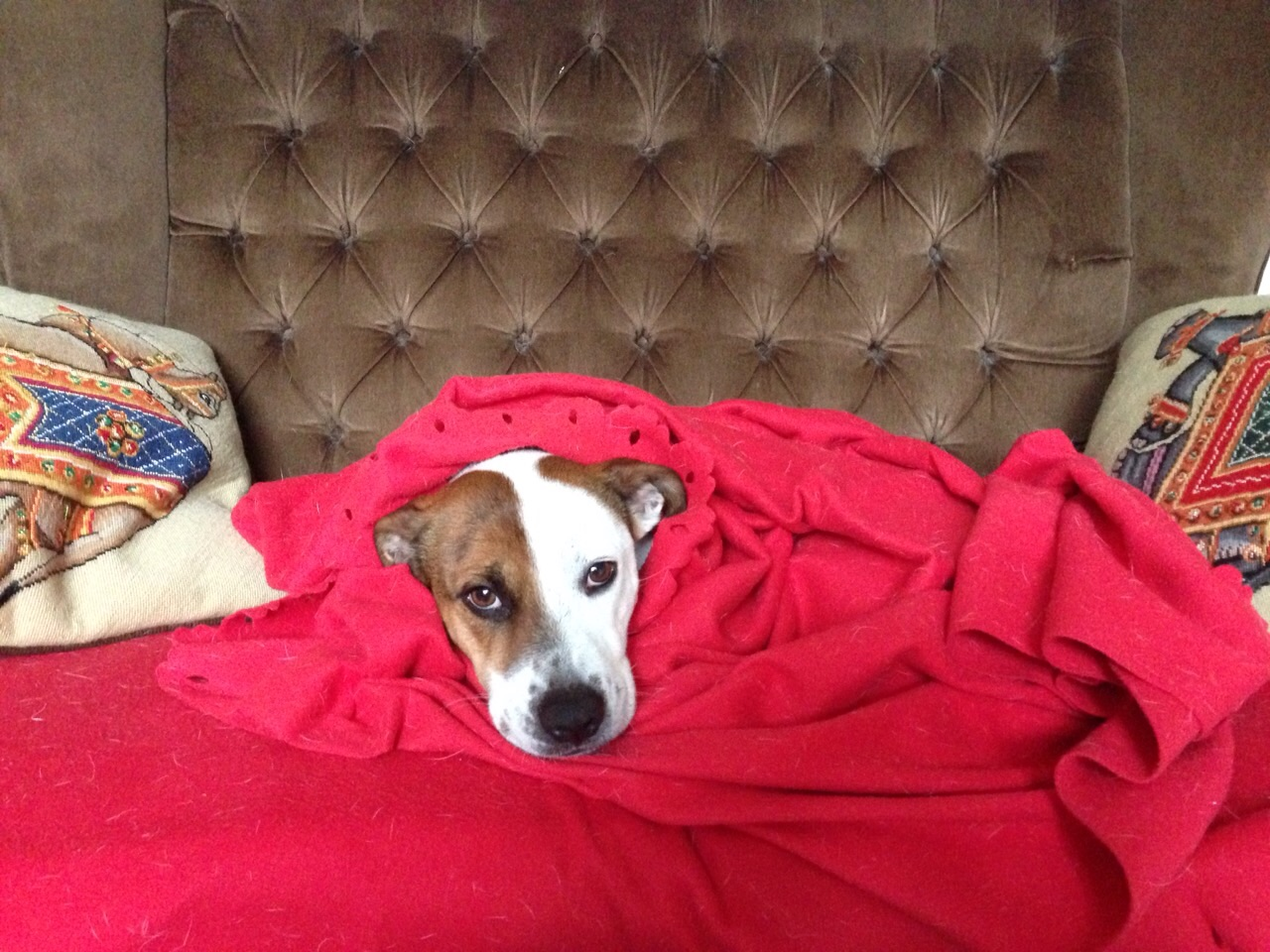 Leisure (As Imagined By Dog) #poems #poetry | TanGental